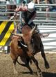 bull & rider - 1016878