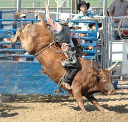 bucking bull & rider