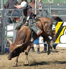 bull & cowboy rider