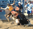 bull throwing rider - 1017003