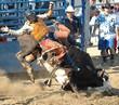 bull throwing rider - 1017003