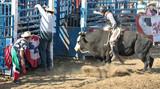bull, rider, and cowboys poster