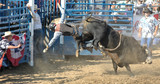 bull throwing rider