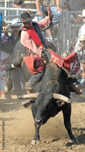 In de dag Stierenvechten bull & rider