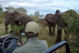 elefanten am geländerwagen poster