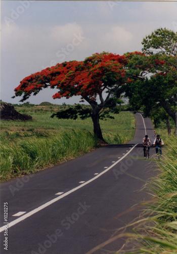 flamboyant & route