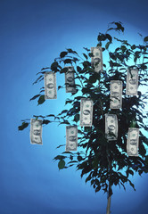 money grows on a tree