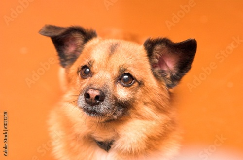 poster of dog on orange background