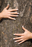 french manicure on a background of a bark-2 poster