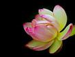 Fototapete Seerose - Flora - Wasserpflanze