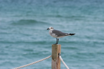 bird standing at a wooden pole in miami beach