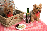 puppies on picnic poster