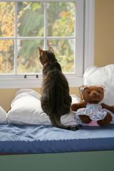 storybook cat