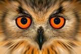 enhanced owl portrait poster