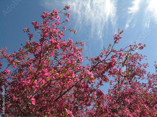 poster of flowering delight