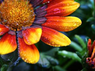 fleur jaune et orange