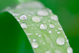 water droplets on a grass blade poster