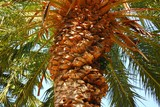 trimmed palm tree poster