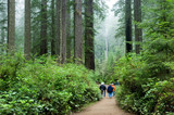 tourists in redwoods poster