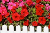 red trumpet flowers poster