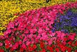 diversity of trumpet flowers poster