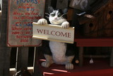 welcome cat poster