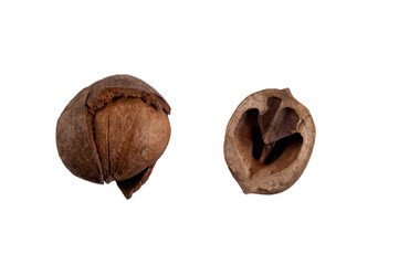 nut with shell