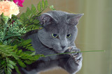 cat catching flower poster