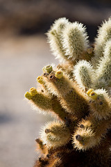 cactus closeup vertical version