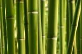 Fototapety bambou