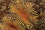 tube worm poster