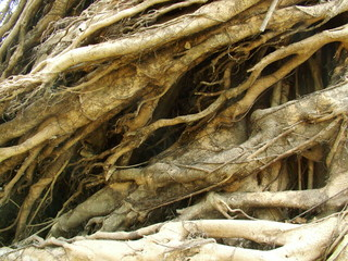 racines, laos