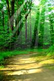 Fototapety sunny forest
