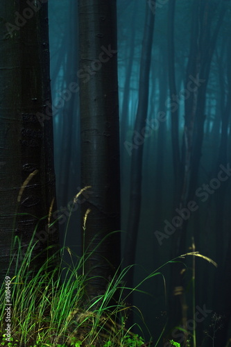 poster of mystical forest