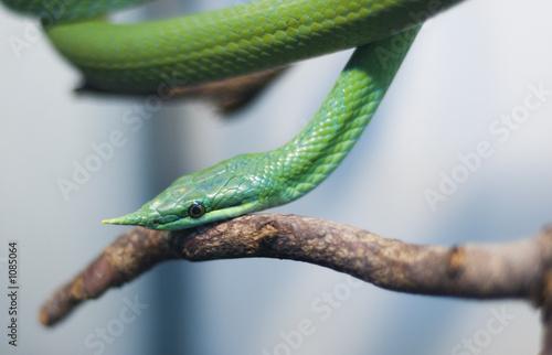 poster of poison snake