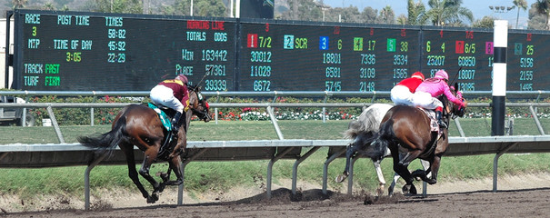 racehorses in the stretch