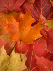 fall leaves - vertical