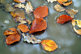leaves in puddle - 1097665