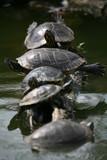 schildkröten poster