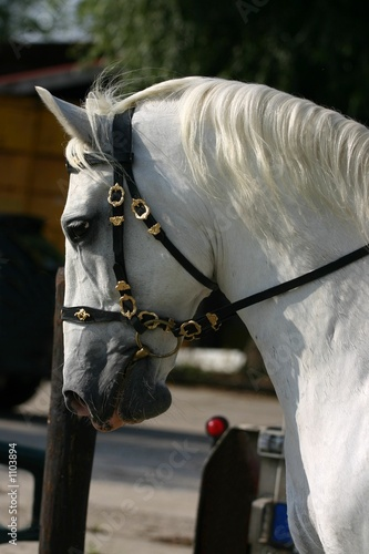 dressage, head close-up