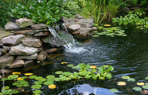 homemade pond - 1111677