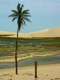 oasis brazil poster