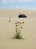 desert adventure poster