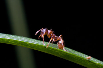 ant on the leaf
