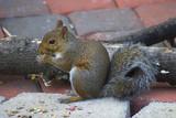 ravenous squirrel poster