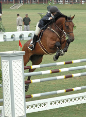show horse jumping