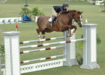 show horse jumping a double barrier