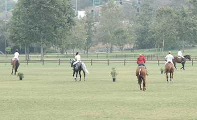show horses in a field