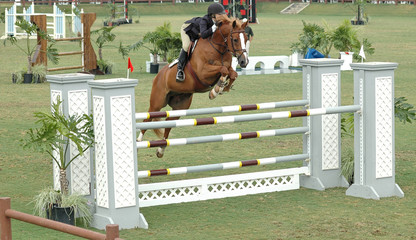 show horse jumping a gate