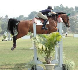 show horse jumper